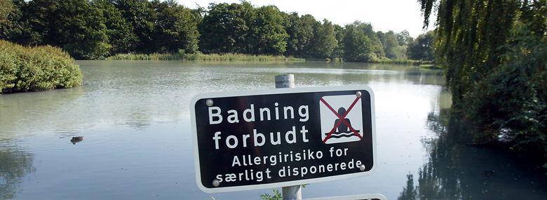 Engsøen som Grindsted Å løber ud i. <br />Foto: Palle Hedemann, Ritzau Scanpix