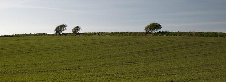 Markdige - ikke ved Esbjerg - men ved Tornby i Vendsyssel.<br />Foto: Peter Marling, Biofoto, Ritzau Scanpix