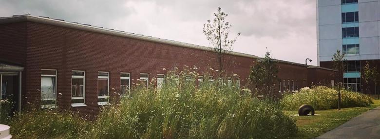 Aarhus Universitetshospital er vild med vilje.<br />Foto: Cecilie Høegh Guldberg, AUH