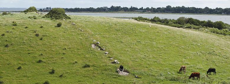 Morænebakke med beskyttet stendige ved Fyns Hoved.<br />Foto: Johnny Madsen, Biofoto, Ritzau Scanpix
