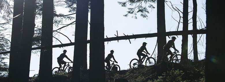Her et mountainbikespor ved Silkeborg.<br />Foto: Joachim Ladefoged, Ritzau Scanpix