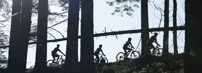 Aalborgs mountainbikespor skader skoven og skal afvikles