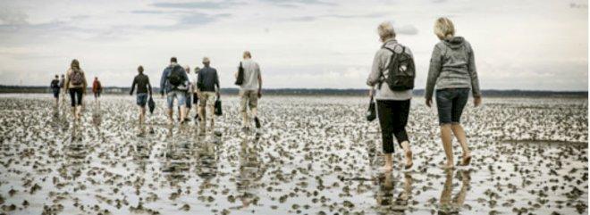 Nationalpark Vadehavet får løft med app og info-steder