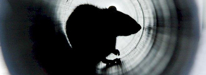 Digital skadedyrbekæmpelse: Rottefælder sender sms'er