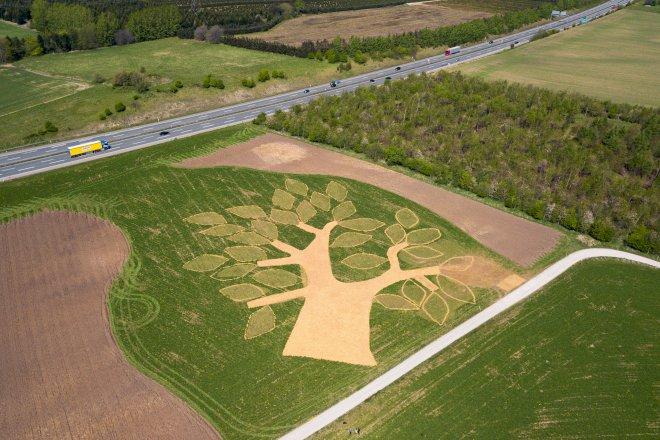 Ny skov ved Aarhus formet som kæmpetræ