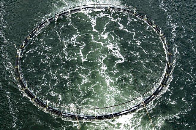 Minister vil samle tilsyn med omstridte fiskefarme hos staten