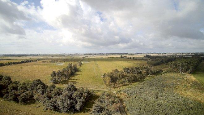 Guldborgsund genopretter natur med vilde heste