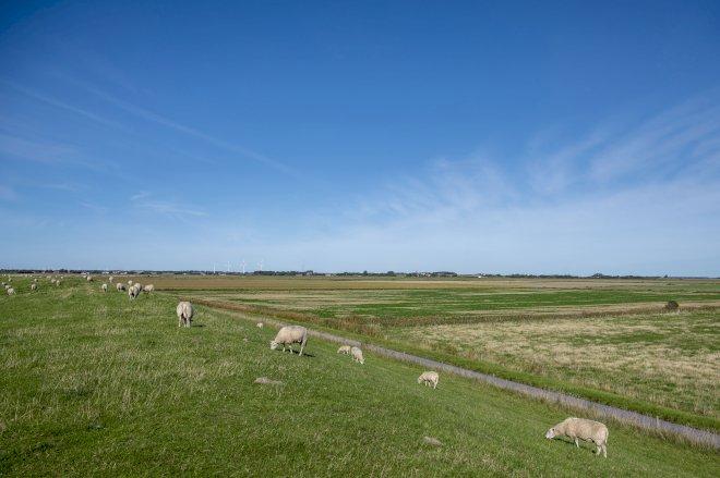 Grønt lys til stort klima- og naturprojekt i Tøndermarsken