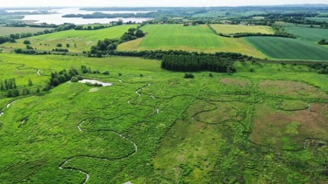 Naturen vender tilbage til naturgenoprettede vandløb