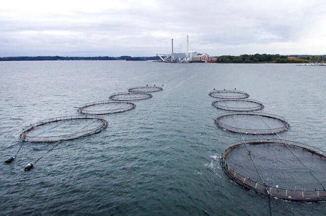 Slut med flere eller større havbrug i Danmark