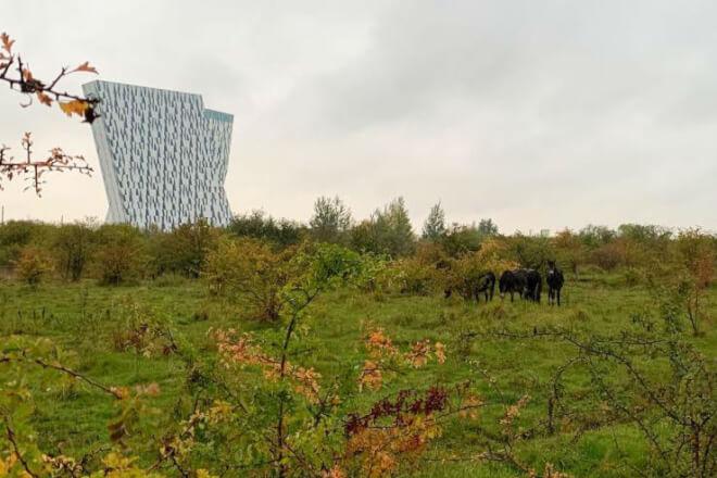 Nu er der også vilde heste i Københavns Kommune