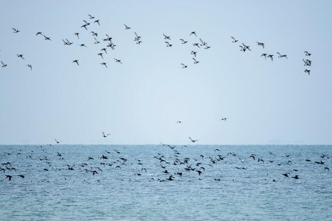 European Energy kritiserer regeringen i Omø Syd-forløb