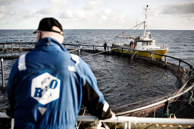 Nu kan data om havbrug nemmere lagres, rapporteres og granskes