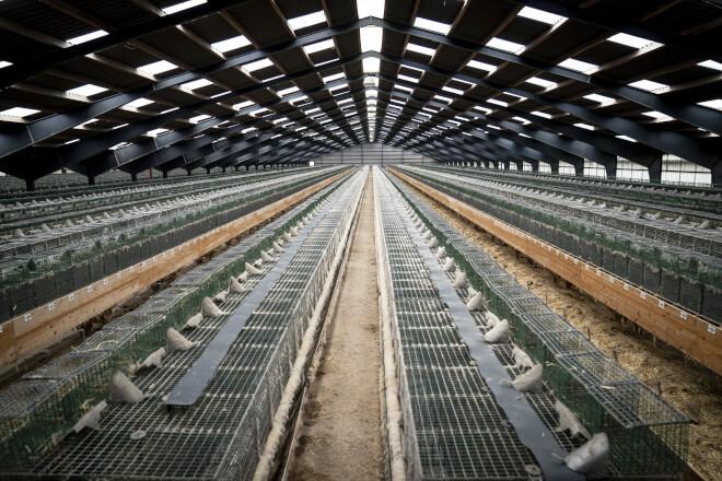 Fødevarestyrelsen afviser at give millioner til minkprojekt