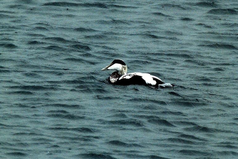 Miljøministeriet sender Omø-område i høring som naturbeskyttelse