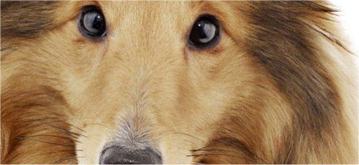 Hunde hygger om ældre på plejecentre
