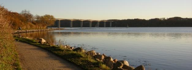 Vejle vil begrænse muslingefiskeri i fjorden