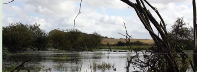 Naturlig kamp mod oversvømmelser